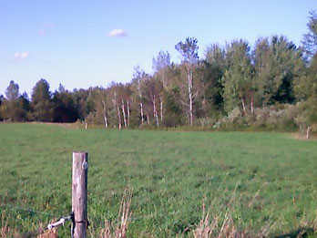 Another pasture on the Shirks' farm