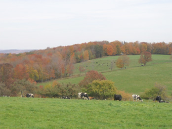 The cows have plenty of pasture on this 400-acre farm